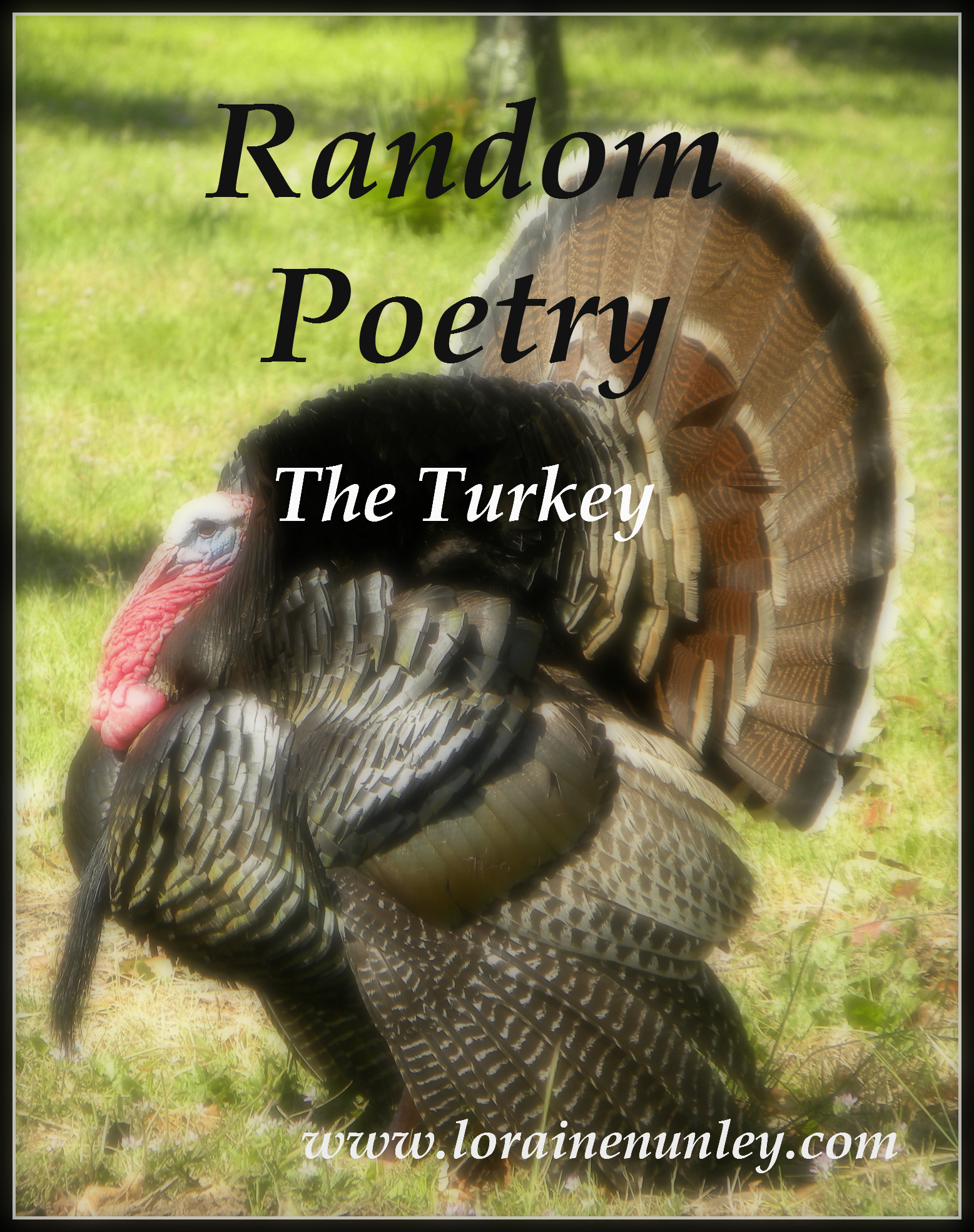 The Turkey (Random Poetry)